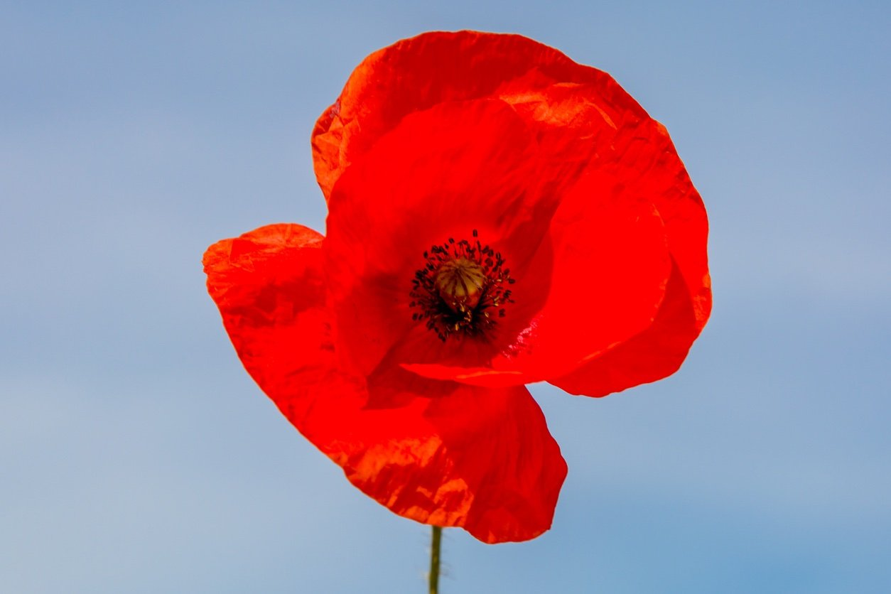 Consider Taxi Cambridge Services to Celebrate Remembrance Day in Style